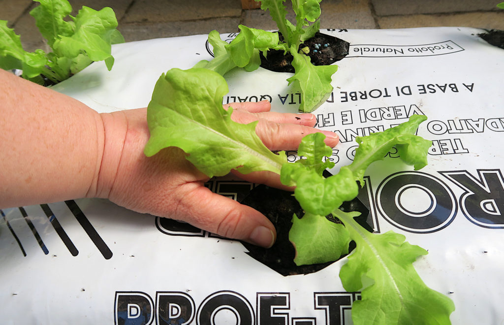 L'orto in un sacco: coltivazione in sacchi di terriccio