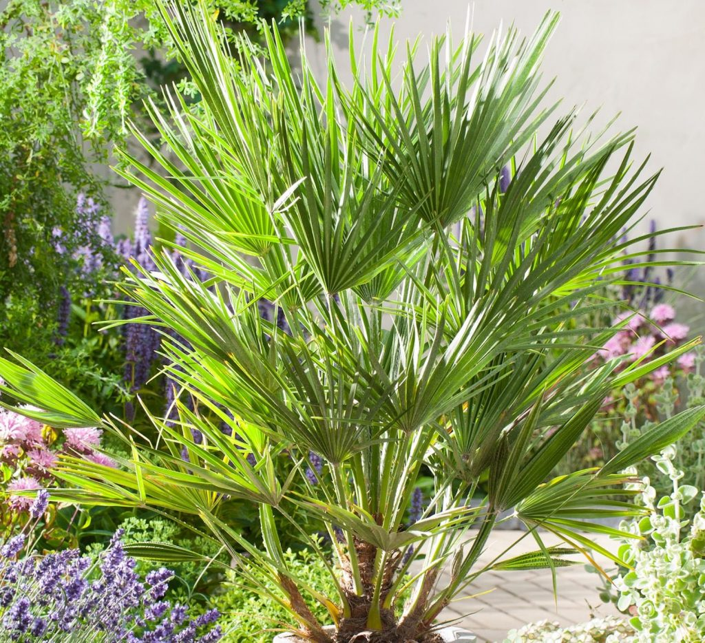 piante focali