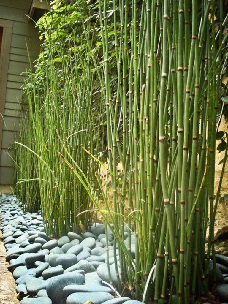 progettare piccolo giardino piante focali
