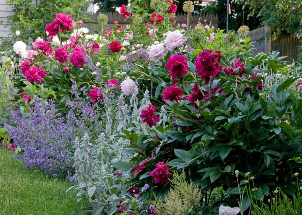 Come progettare un piccolo giardino fai da te